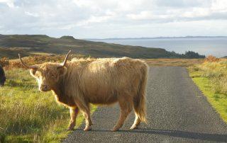Animals on road